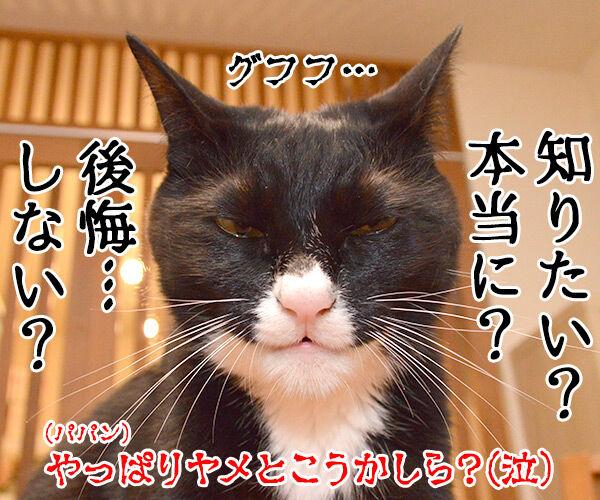 あなたが留守の時 ペットは何してる? 猫の写真で4コマ漫画 4コマ目ッ
