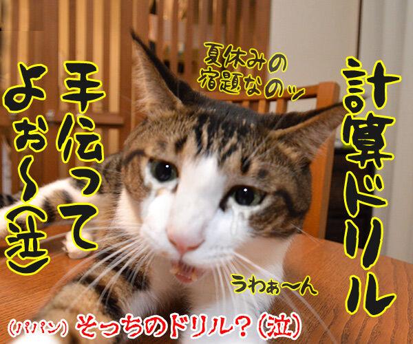 ドリルすんのかいせんのかい 其の二 猫の写真で4コマ漫画 4コマ目ッ