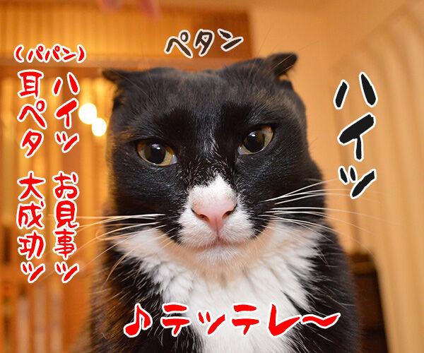 宴会芸 猫の写真で4コマ漫画 3コマ目ッ
