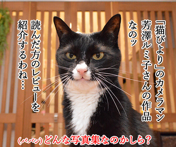 猫好きが泣いて喜ぶ写真集をご紹介ッ 猫の写真で4コマ漫画 2コマ目ッ