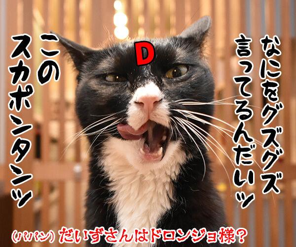 そんなにボヤいてると…… 猫の写真で4コマ漫画 4コマ目ッ