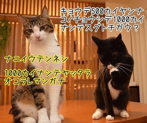 夫婦漫才 ミカとジョージ 其の二 猫の写真で4コマ漫画 2コマ目ッ