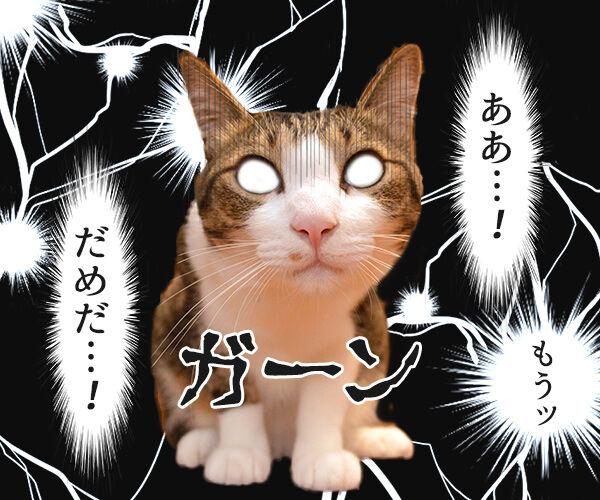 ああ…! もうッ だめだ…! 猫の写真で4コマ漫画 1コマ目ッ