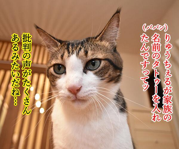 りゅうちぇるのタトゥーに賛否両論なのよッ 猫の写真で4コマ漫画 1コマ目ッ