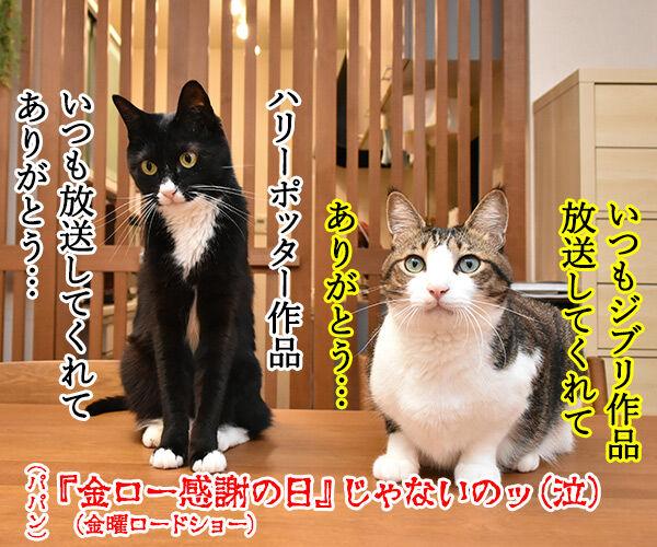 『勤労感謝の日』だから感謝してほしいのッ 猫の写真で4コマ漫画 4コマ目ッ