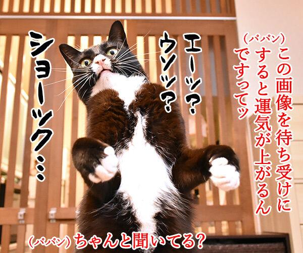 ショックアイさんの待ち受け画像で運気アップなのよッ 猫の写真で4コマ漫画 2コマ目ッ