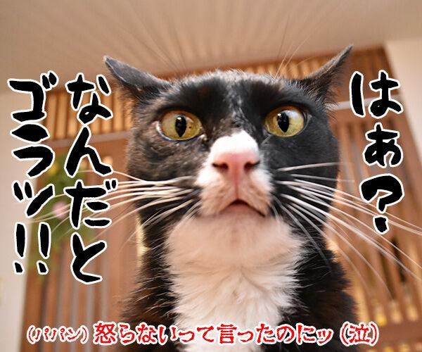 今週のコンプライアンス標語はこれなのよッ 猫の写真で4コマ漫画 3コマ目ッ