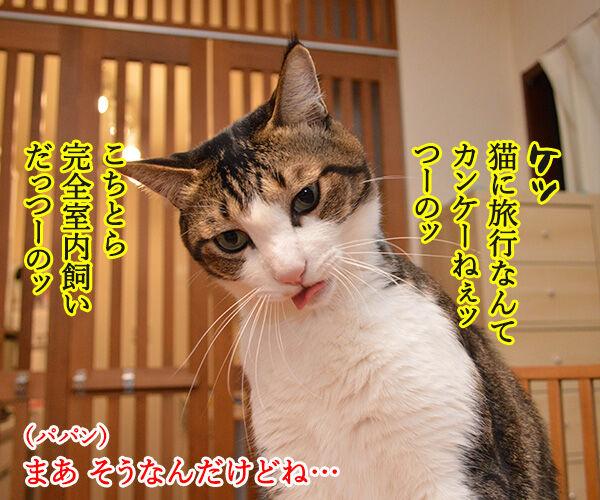 GO TO トラベルキャンペーンが始まったのよッ 猫の写真で4コマ漫画 2コマ目ッ