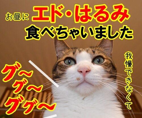 新入社員 あずき 其の二 猫の写真で4コマ漫画 4コマ目ッ