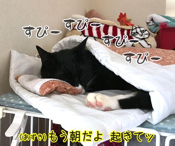 もう朝だよー 起きてー 猫の写真で4コマ漫画 1コマ目ッ