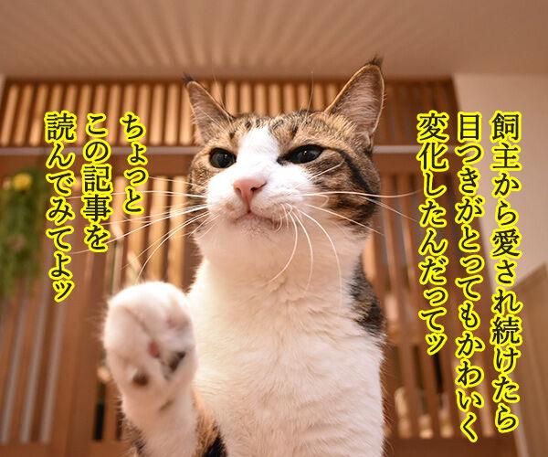 愛情を受け続けた猫ちゃんがとってもかわいくなったんですってッ 猫の写真で4コマ漫画 1コマ目ッ