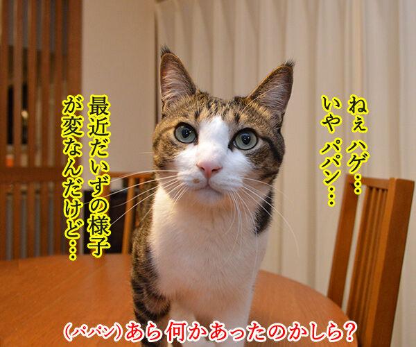 五月だから 猫の写真で4コマ漫画 1コマ目ッ