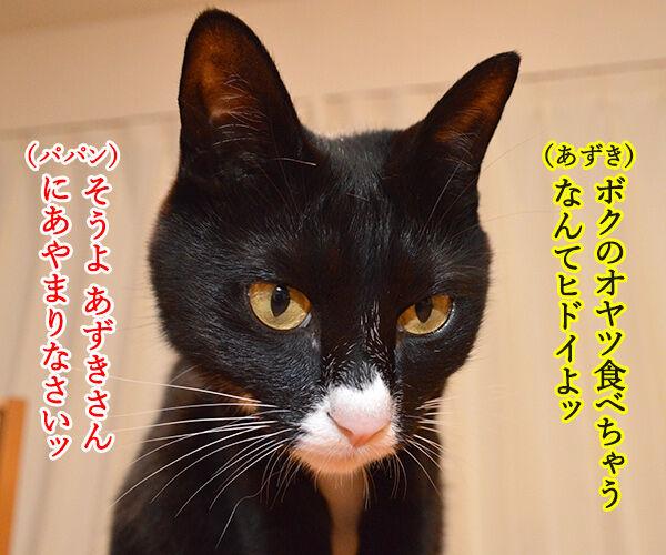 変身 猫の写真で4コマ漫画 1コマ目ッ