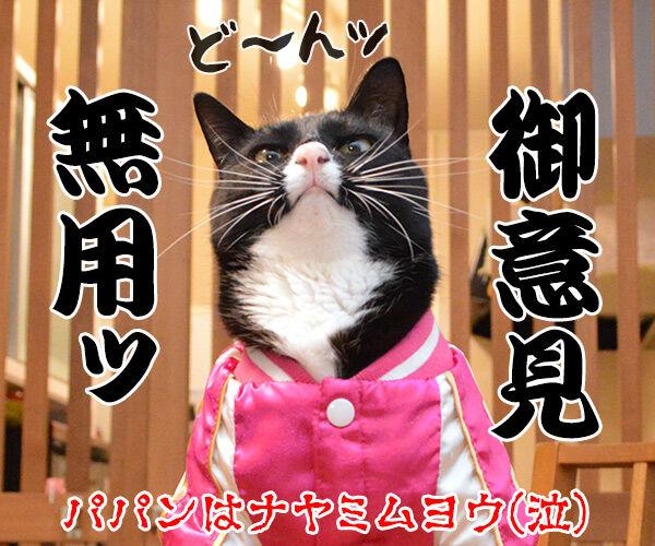 ドクターXごっこ「御意ッ」 猫の写真で4コマ漫画 4コマ目ッ