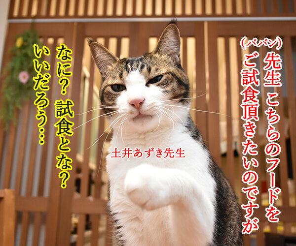 先生、お味はいかがでしょうか? 猫の写真で4コマ漫画 1コマ目ッ