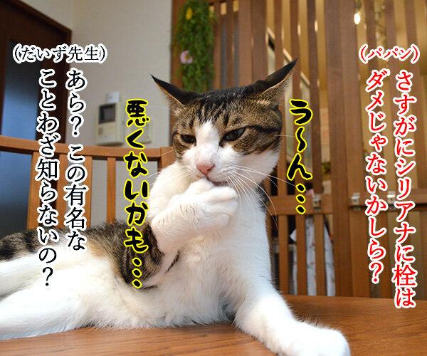 教えてッ だいず先生ッ 其の二 猫の写真で4コマ漫画 3コマ目ッ