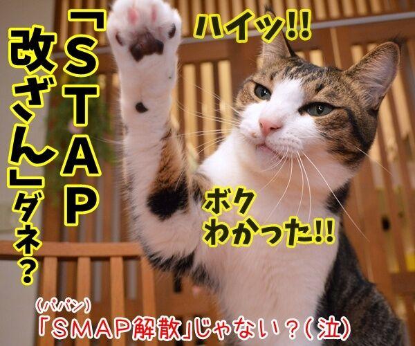 流行語大賞はどれになると思う? 猫の写真で4コマ漫画 4コマ目ッ