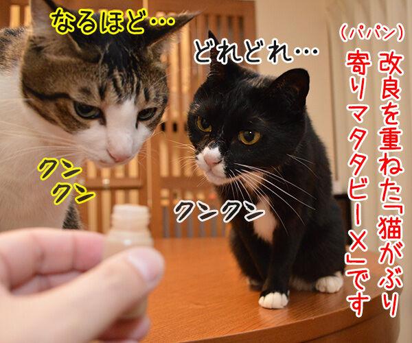 マタタビーX 猫の写真で4コマ漫画 2コマ目ッ