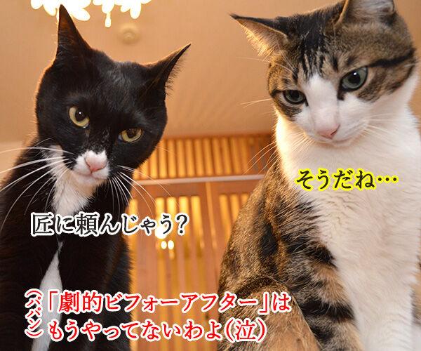 なんということでしょう? 猫の写真で4コマ漫画 4コマ目ッ