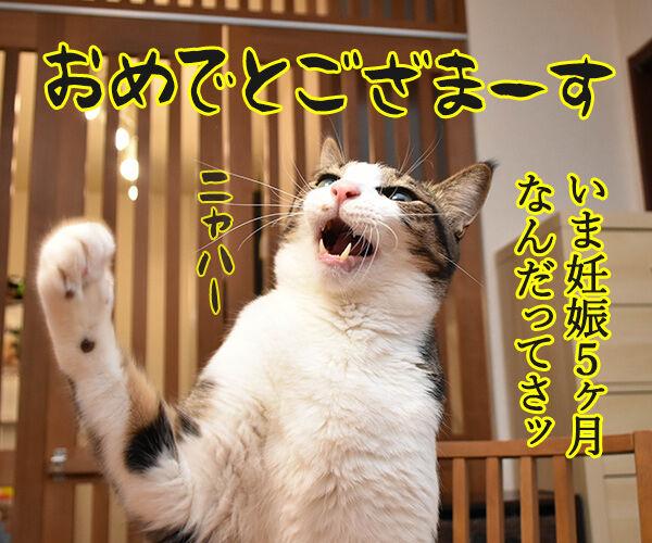ぺこが妊娠でオメデトゴザマースッ 猫の写真で4コマ漫画 2コマ目ッ