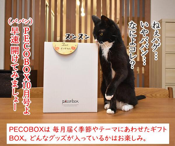 PECOBOXを初めて購入してみたのッ 猫の写真で4コマ漫画 1コマ目ッ