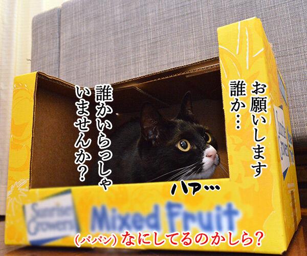 捨て猫物語 猫の写真で4コマ漫画 1コマ目ッ