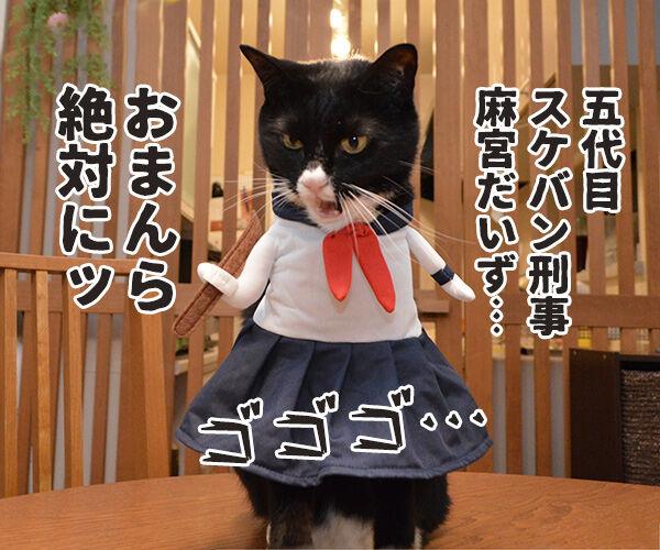 ゴキブリが出たらあのヒトを呼ぶのよッ 猫の写真で4コマ漫画 3コマ目ッ