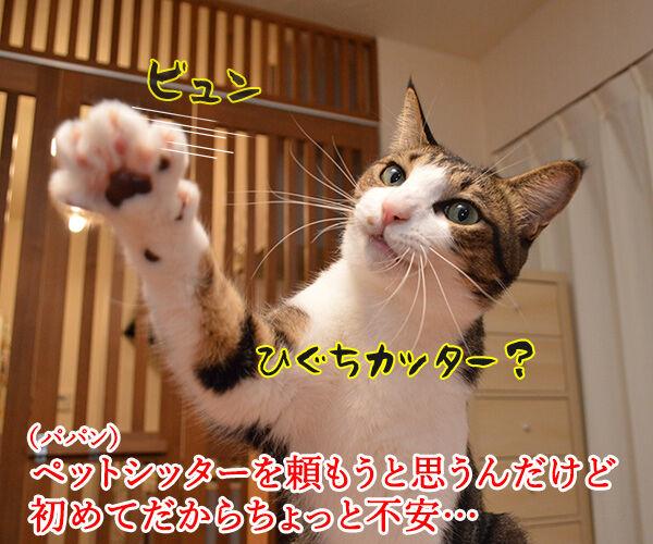 ペットシッターを頼もうかしら? 猫の写真で4コマ漫画 1コマ目ッ