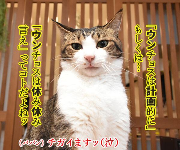 台風の影響で大規模な計画運休なのよッ 猫の写真で4コマ漫画 2コマ目ッ