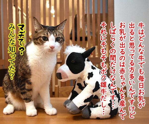 来年の干支の丑さんがご挨拶なのッ 猫の写真で4コマ漫画 3コマ目ッ