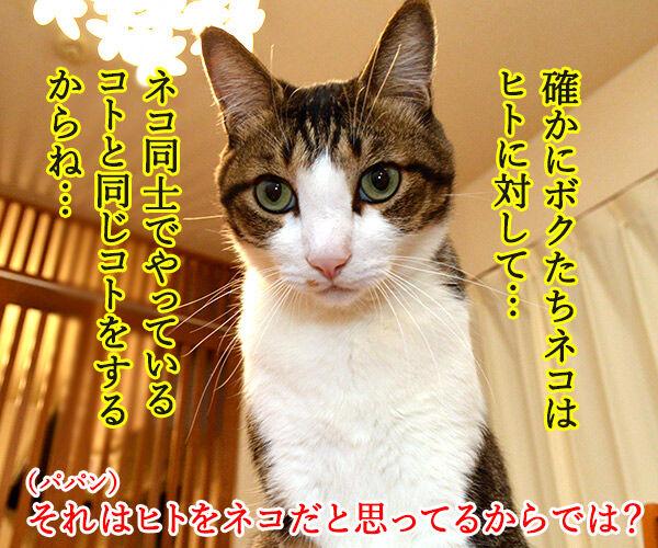 ネコは飼い主をネコと思っている? 猫の写真で4コマ漫画 2コマ目ッ