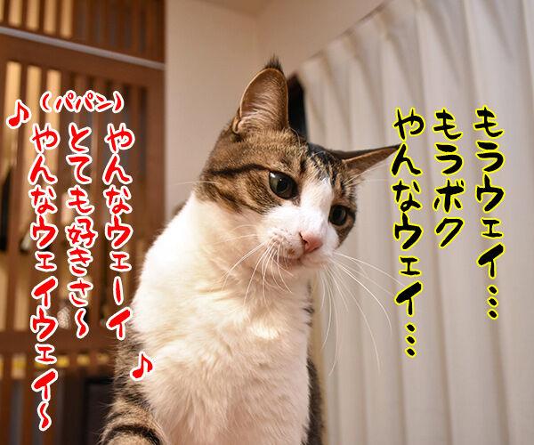 猫じゃらさんでウェイウェーイ 猫の写真で4コマ漫画 4コマ目ッ