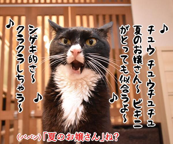『夏のお嬢さん』はチュウ チュウチュチュなのッ 猫の写真で4コマ漫画 1コマ目ッ