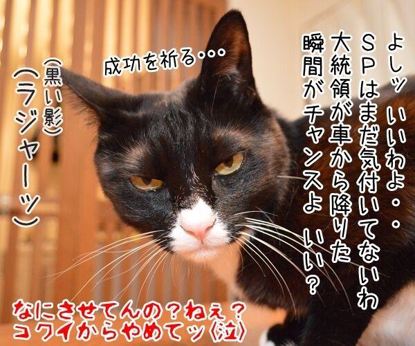 オバマ大統領が広島訪問ですってッ 猫の写真で4コマ漫画 4コマ目ッ