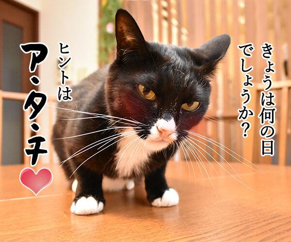 きょうは何の日? アタチの日ッ 猫の写真で4コマ漫画 1コマ目ッ