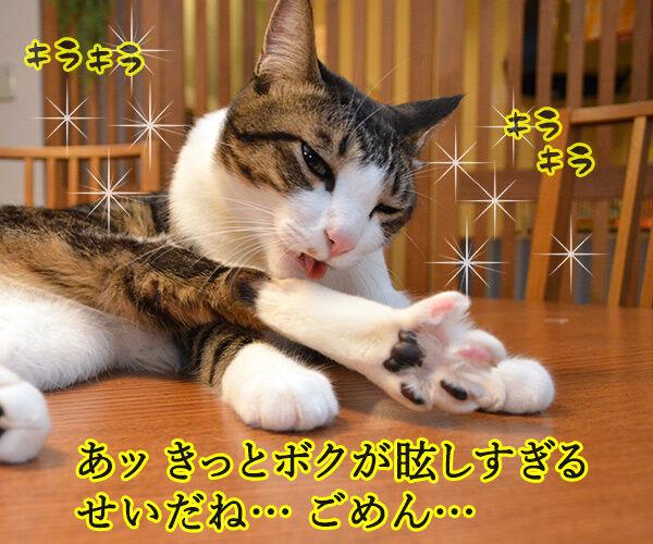 流し目王子 早乙女あずき 猫の写真で4コマ漫画 3コマ目ッ