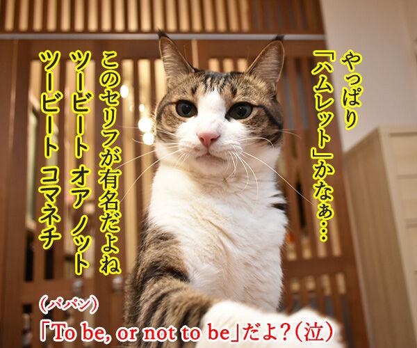 シェイクスピアの四大悲劇といえば? 猫の写真で4コマ漫画 2コマ目ッ