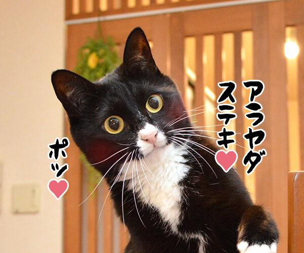 エビキャッチ 其の一 猫の写真で4コマ漫画 4コマ目ッ