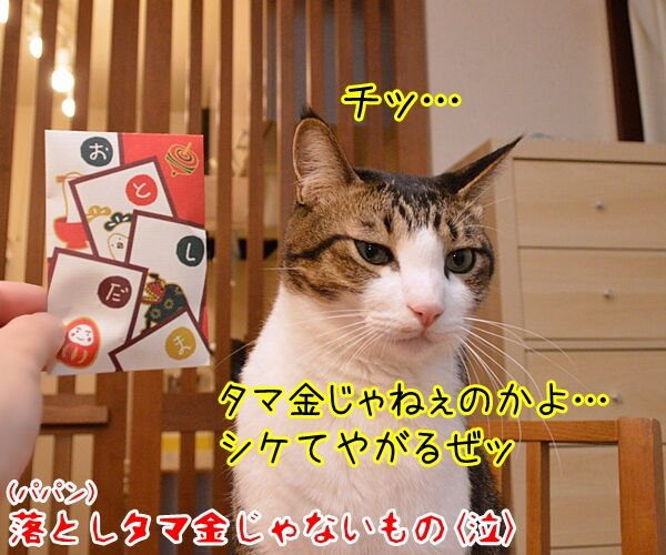 お正月だからあずだいにお年玉あげるわよッ 猫の写真で4コマ漫画 4コマ目ッ