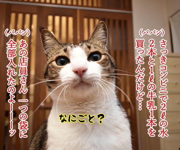 コンビニの袋詰めの話なのよッ 猫の写真で4コマ漫画 1コマ目ッ
