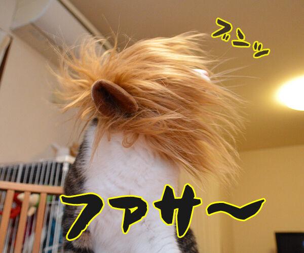 かまやつヘアーは 猫の写真で4コマ漫画 2コマ目ッ
