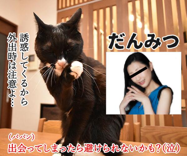 外出時に避けるべき3密とは? 猫の写真で4コマ漫画 3コマ目ッ