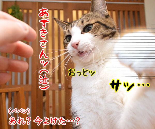 いつもウンチョス片付けてくれてアリガトー 猫の写真で4コマ漫画 3コマ目ッ