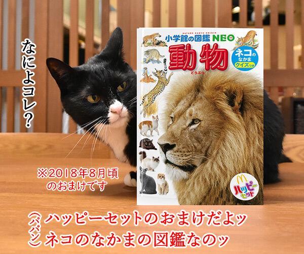 ハッピーセットのおまけでネコのなかまの図鑑がもらえるのッ 猫の写真で4コマ漫画 1コマ目ッ