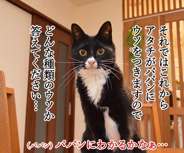 ウソには種類があるんです 猫の写真で4コマ漫画 3コマ目ッ