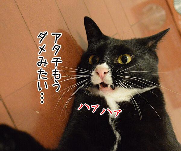 もうダメみたい… 猫の写真で4コマ漫画 1コマ目ッ