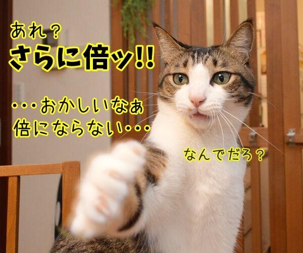 倍率ドーン!! さらに倍ッ!! 猫の写真で4コマ漫画 2コマ目ッ