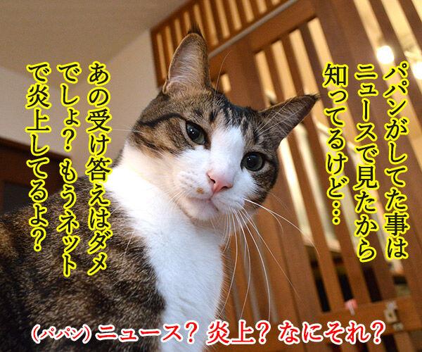 えッ!?パパンが帰ってきた…… 猫の写真で4コマ漫画 3コマ目ッ