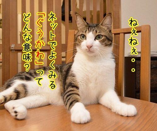 「ぐうかわ」ってどんな意味なの? 猫の写真で4コマ漫画 1コマ目ッ