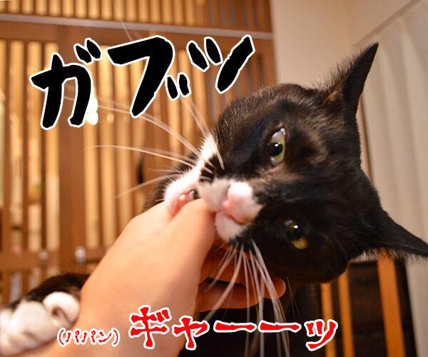猫が噛む理由 猫の写真で4コマ漫画 3コマ目ッ